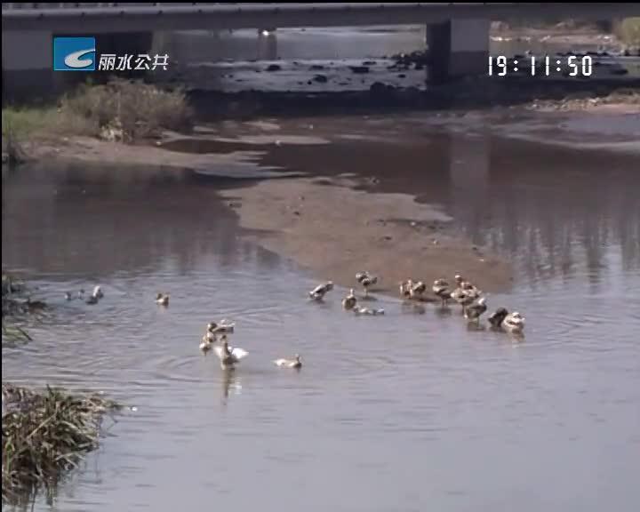 [每周聚焦]云和:县城河道保洁落实不到位