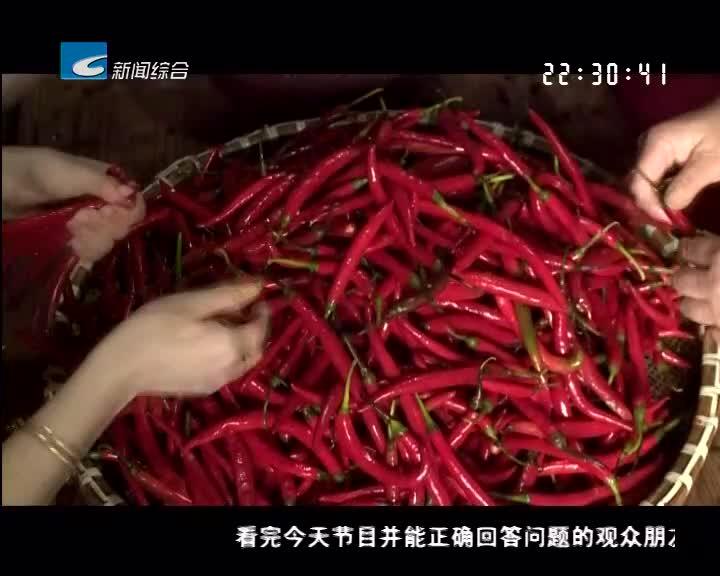 【乡里乡亲】疯狂的辣椒酱(中)