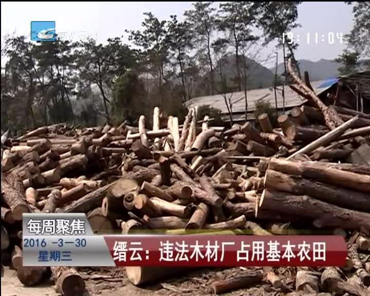 [每周聚焦] 缙云:违法木材厂占用基本农田