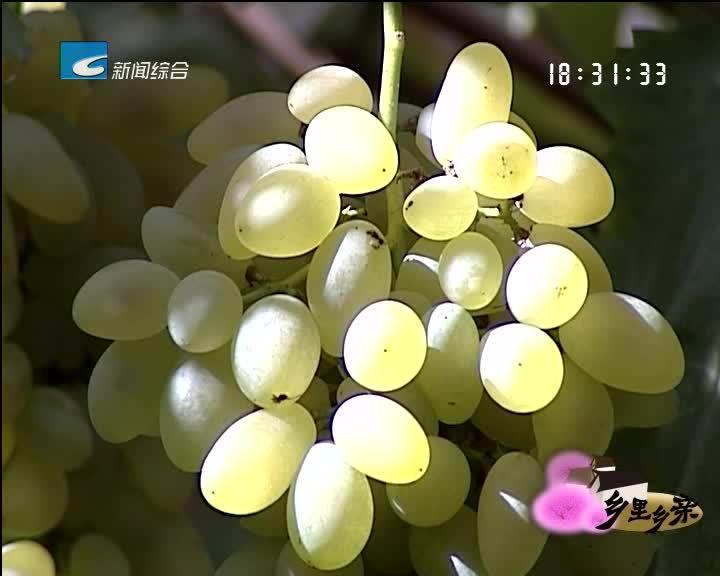 【乡里乡亲】寻访最甜葡萄