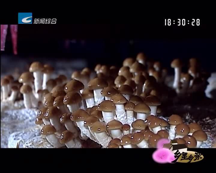 【乡里乡亲】营养好吃的滑菇