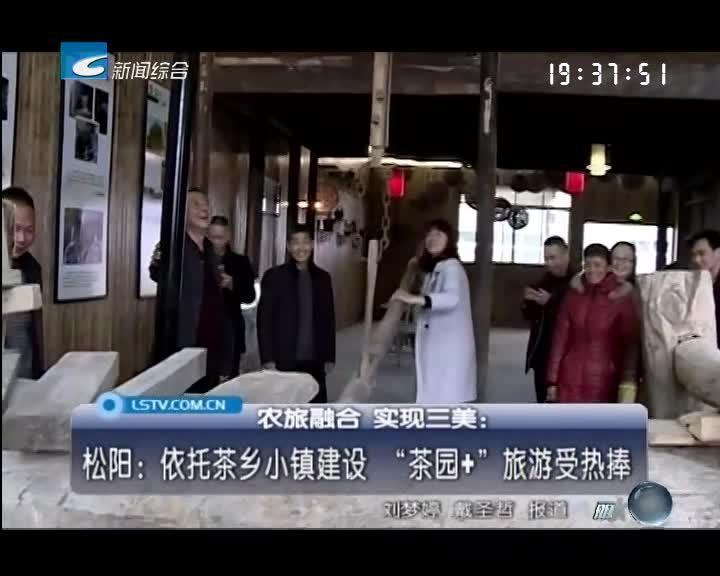 """松阳:依托茶乡小镇建设 """"茶园+""""旅游受热捧"""