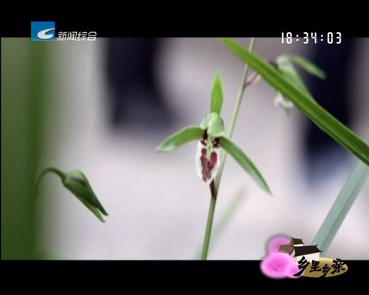 【乡里乡亲】致富兰花