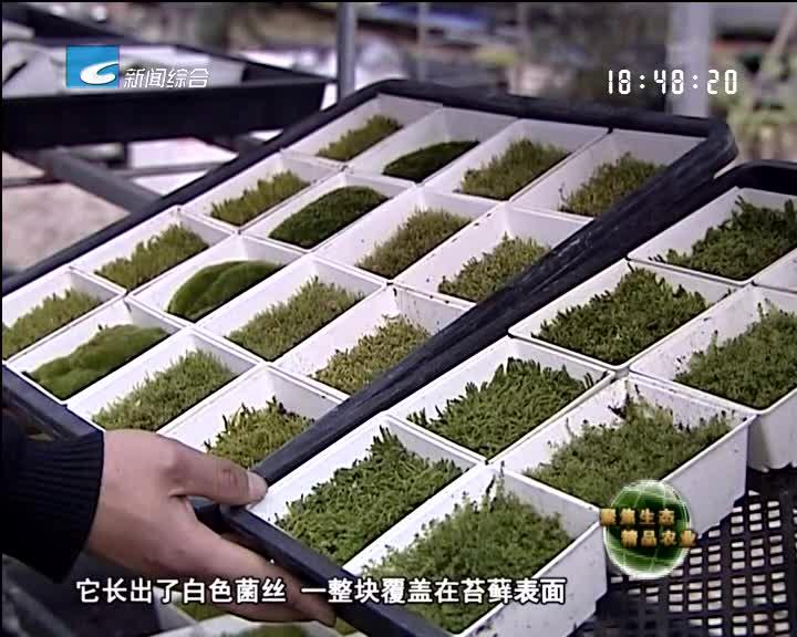 【聚焦生态精品农业】苔藓之恋