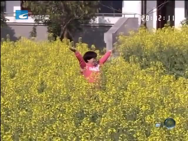 春之花海:丽水职业技术学院油菜花开金灿灿