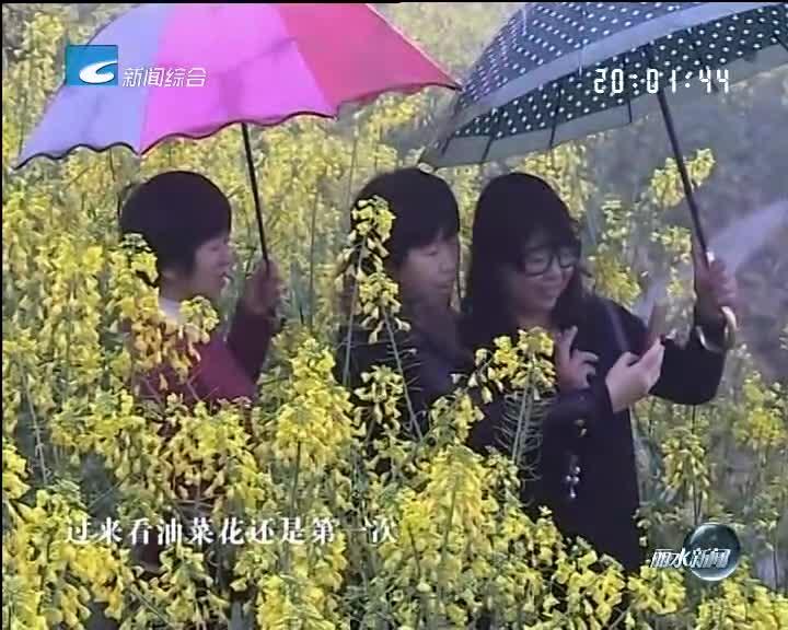 青田小舟山油菜花田进入盛开期 游客雨中览仙境