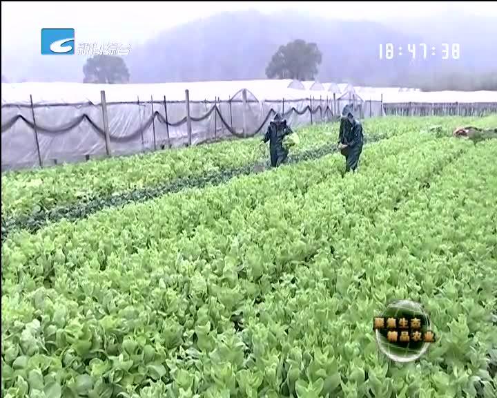 【聚焦生态精品农业】叫好又叫卖的净菜
