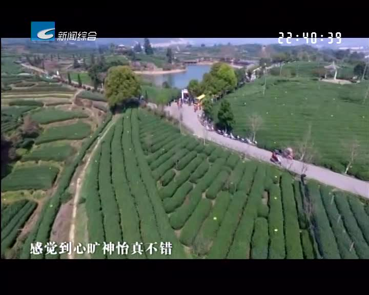 """[农旅融合 实现三美]松阳:""""茶+旅""""模式 茶产业转型新方向"""