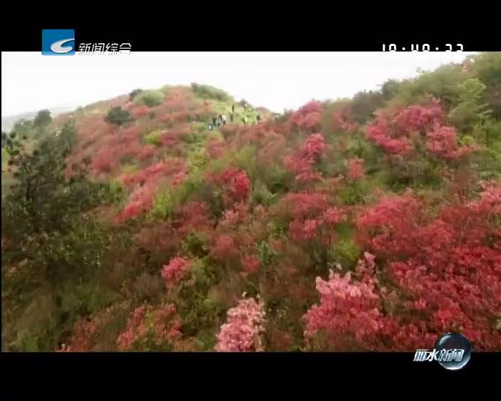遂昌高坪:杜鹃花开田头热闹 农旅融合助力乡村蝶变