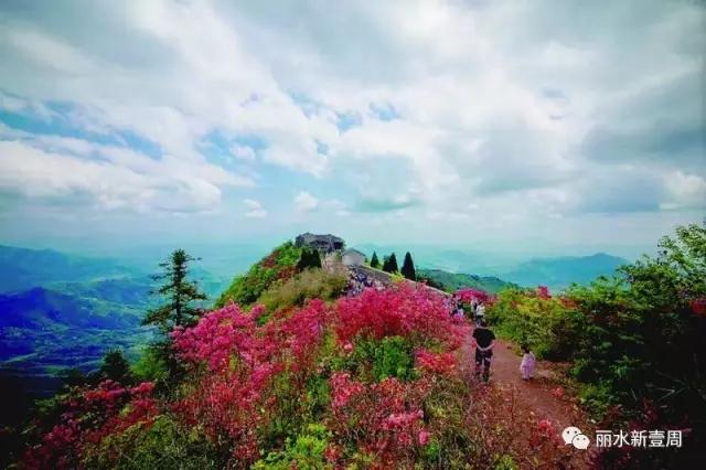 庆元龙头山 穿过万亩竹海看千亩杜鹃