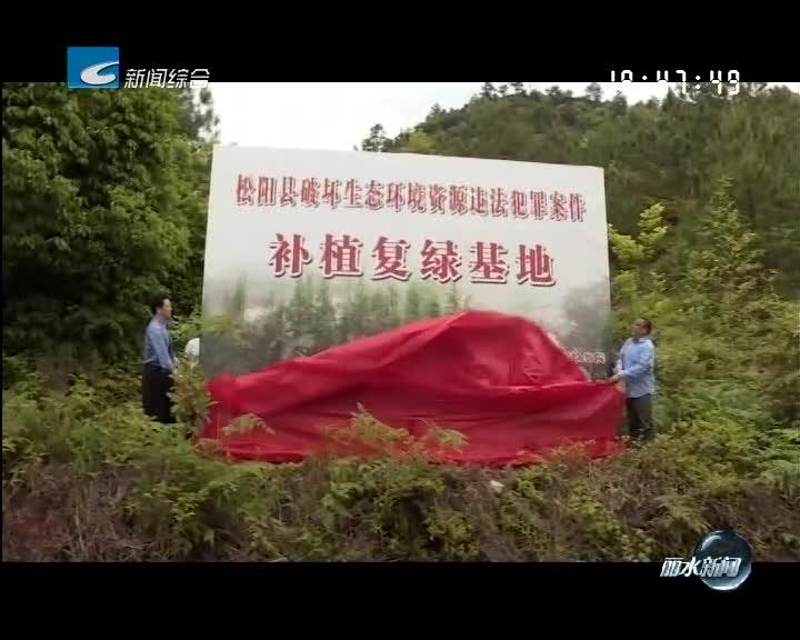"""松阳:创新""""执法+生态修复""""办案模式 绿色司法护航生态建设"""
