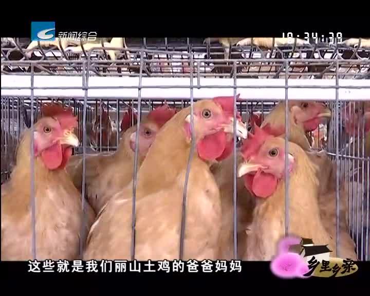 【乡里乡亲】浙江十大名禽——丽山土鸡