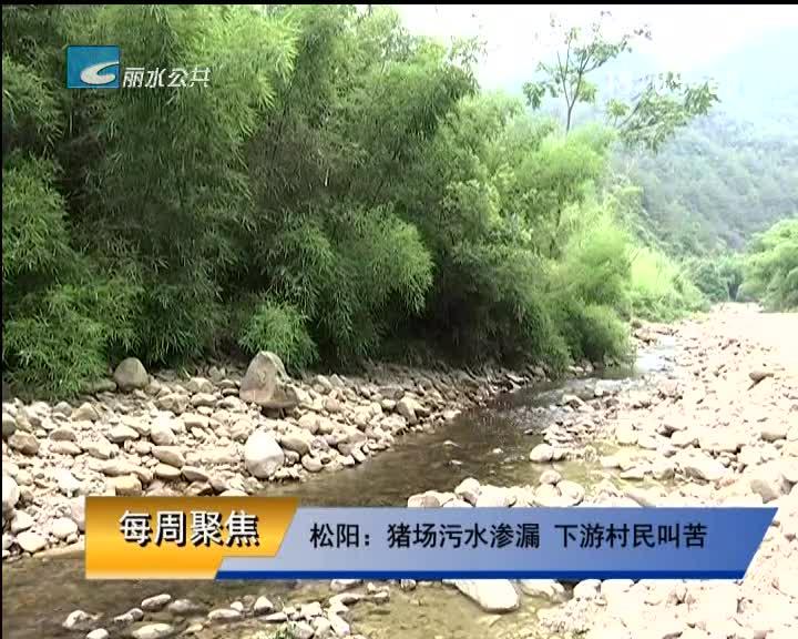 【每周聚焦】松阳:猪场污水渗漏 下游村民叫苦