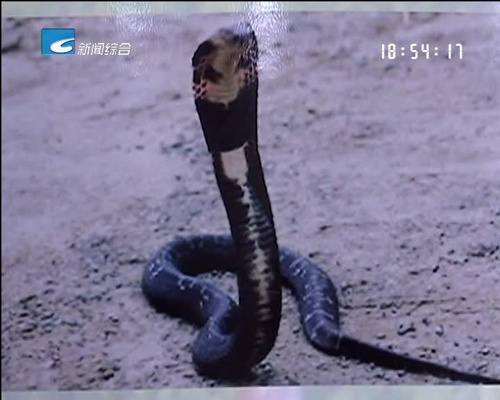 【健康丽水】蛇伤不可怕就怕找错郎中用错药