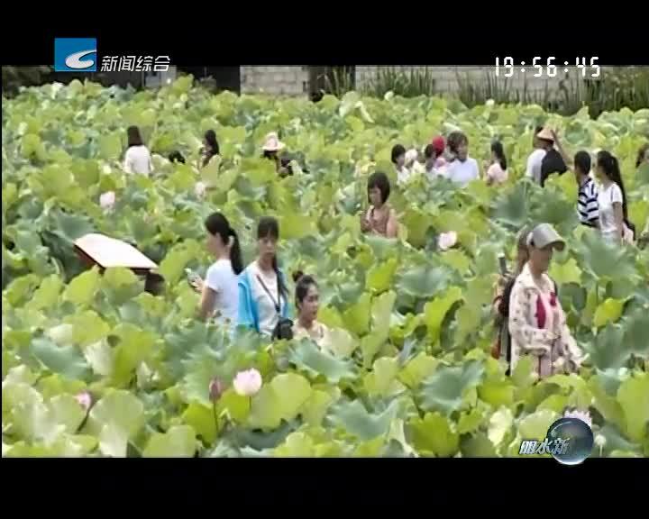 庆元安南乡安隆村:以荷为媒聚人气 古风水韵促发展