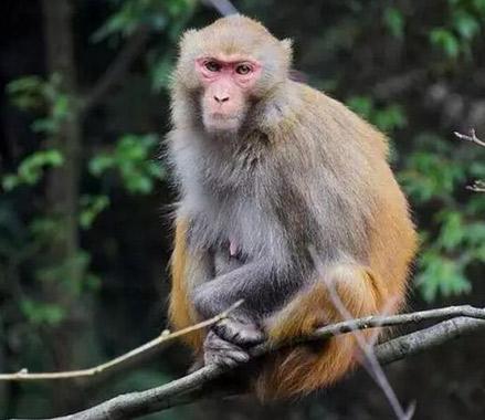 景宁大仰湖发现国家二级保护动物