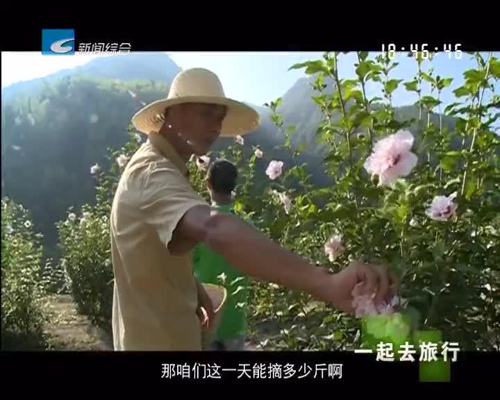 【一起去旅行】木槿花盛开 开出了美丽经济