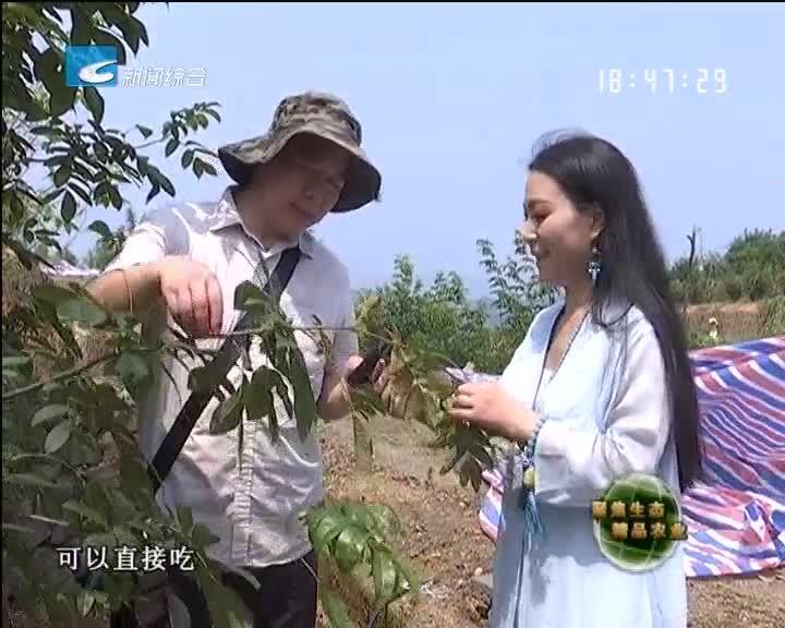 【聚焦生态精品农业】青钱柳变成摇钱树