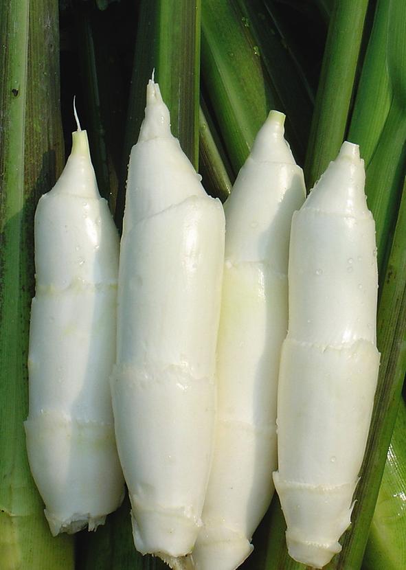 """缙云茭白,一年四季都可以吃到的蔬中""""美人腿"""""""
