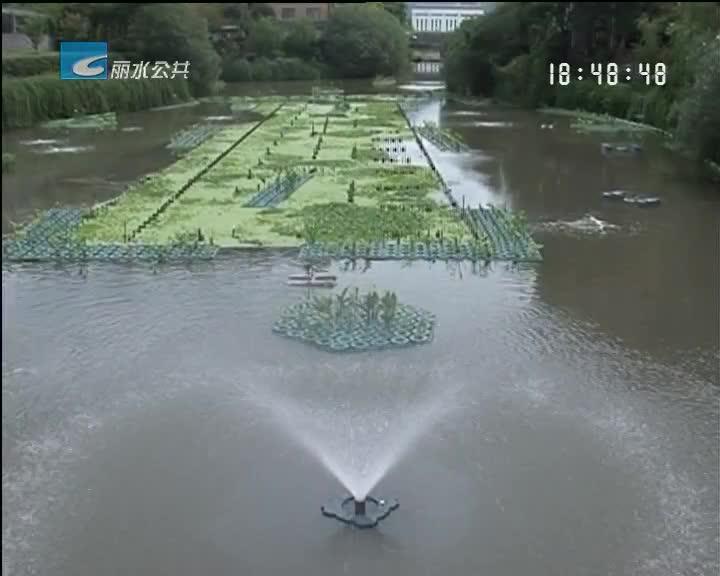 【喜迎十九大 人人讲文明】城区内河美丽蝶变 市民分享治水成果
