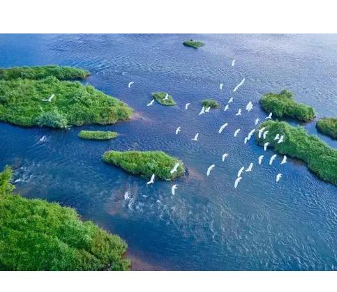 壮观!松阳松阴溪云集数千只白鹭