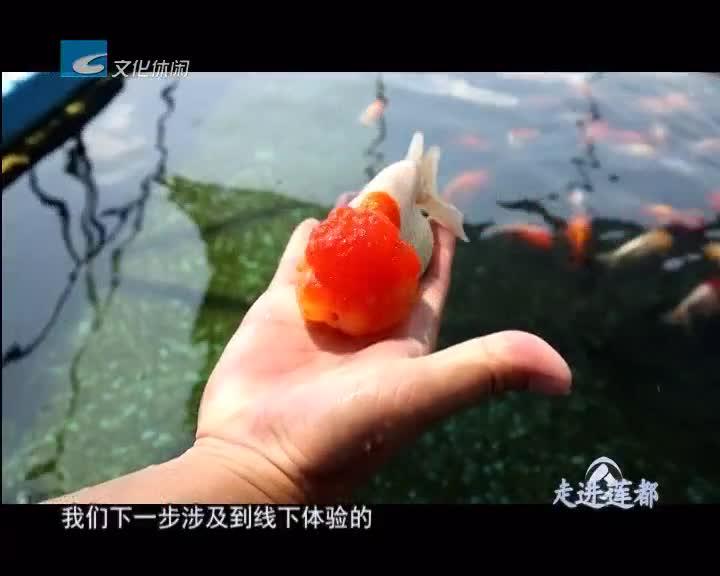 【走进莲都】柳剑光和鱼的情缘