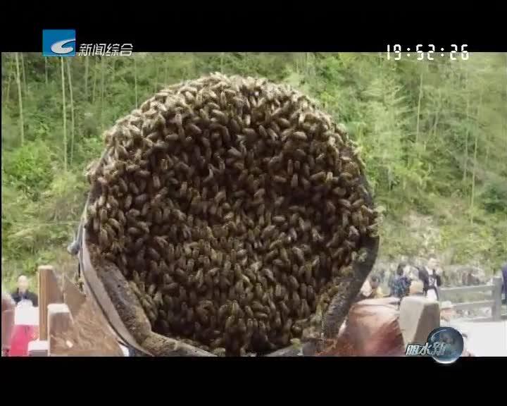 龙泉住龙镇举行首届采蜜节