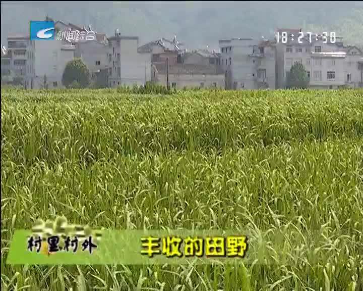 【乡里乡亲】丰收的田野