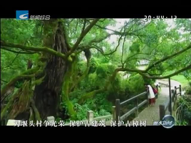 述说丽水九古:千年古樟守护堰头 游人首选休闲地