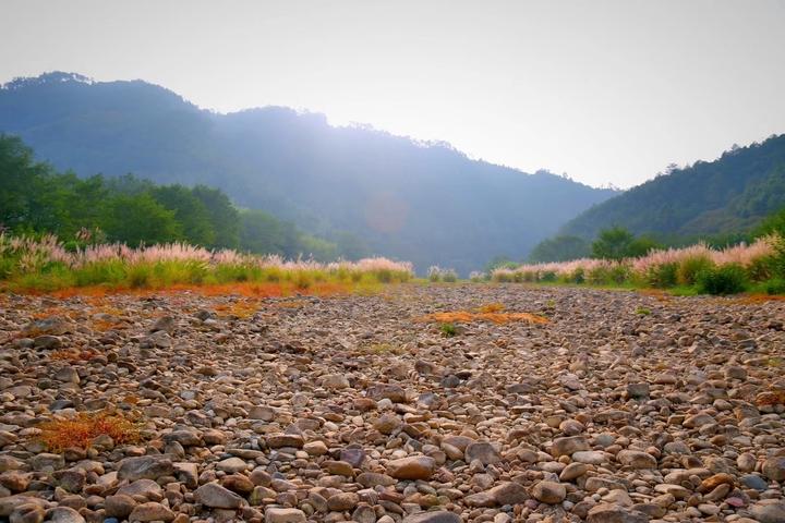 秋天不只有红叶 到松阳可邂逅芦苇苍苍