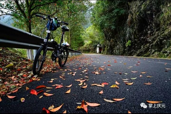 庆元黄金骑行道 感受这个季节的冷艳之美