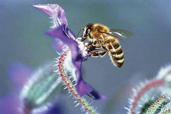 """""""甜蜜""""养蜂产业  助力精准扶贫"""
