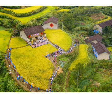 """高山上的""""景宁600计划"""" 以农业公共品牌撬动乡村振兴"""