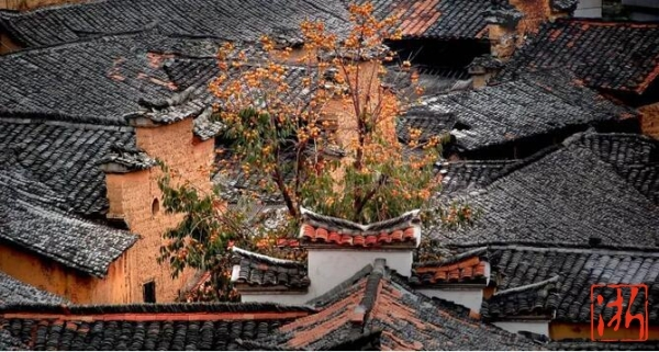 以柿为美,松阳大山深处令人惊艳的阶梯式古村落