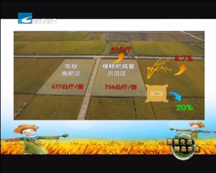 【聚焦生态精品农业】盘点水稻丰收那些事