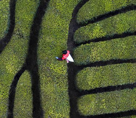 """浙江日报整版点赞 莲都全力建设丽水大花园""""中心园"""""""