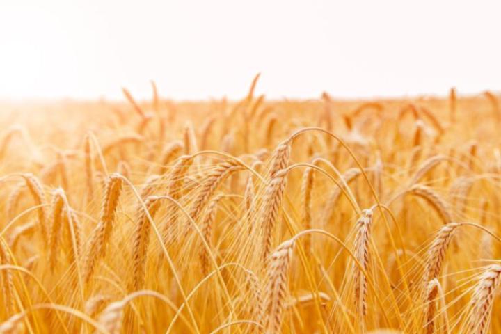 国家统计局:2017年是历史上第二粮食高产年