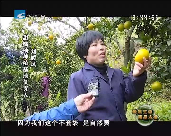 【聚焦生态精品农业】云和:百亩甜橘柚  香飘满山谷