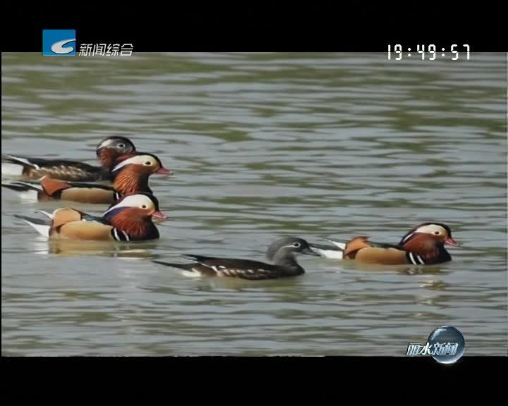 """[筑梦·新时代]""""鸟人"""" 宋世和:关爱鸟类 保护生态"""