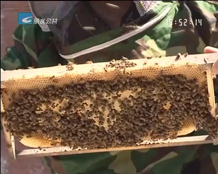 我市企业主导制定的《蜂花粉生产技术规范》国家标准获批发布