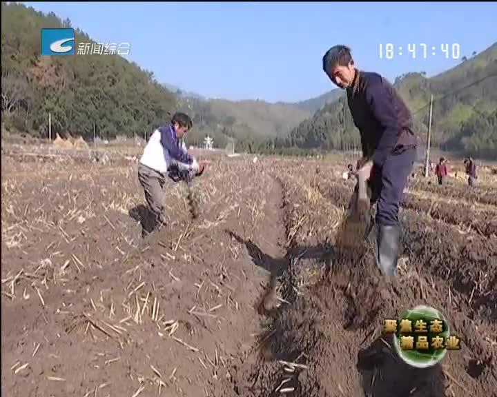 【聚焦生态精品农业】水田轮种好效益