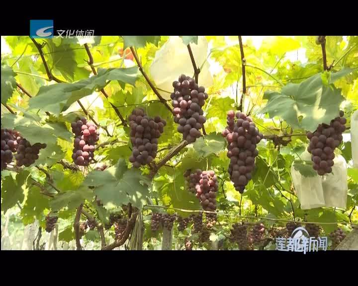 [新闻快讯]莲都区新增5家省级示范家庭农场