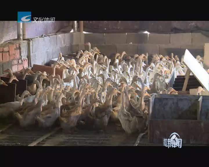 莲都区率先成为全省首批畜牧业绿色发展示范县