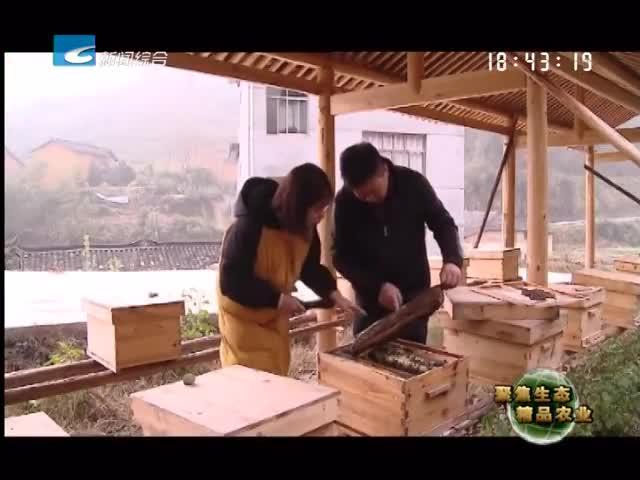 """【聚焦生态精品农业】云和:甜蜜的""""蜂""""景事业"""