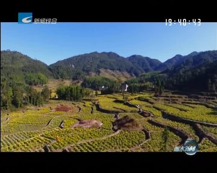 青田:加快农业产业发展 农业增效 农民增收 农村增美