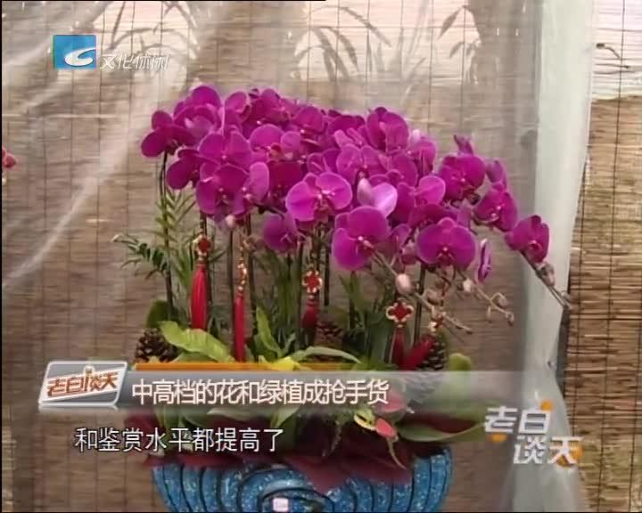 [我们的节日·春节]买些花草过年 蝴蝶兰成新宠