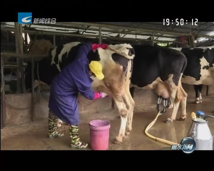 电视问政·反馈:奶牛养殖场各项隐患正在有序推进改造提升中