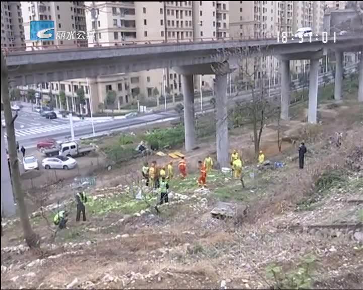 """高速边坡成""""菜园"""" 路政部门清场3000多平米"""