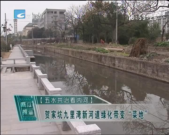 """[五水共治看内河]贺家坑九里湾新河道绿化带变""""菜地"""""""
