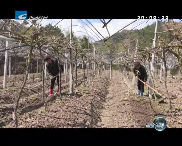 [春耕备耕]青田:人勤春来早 百亩提园忙种植